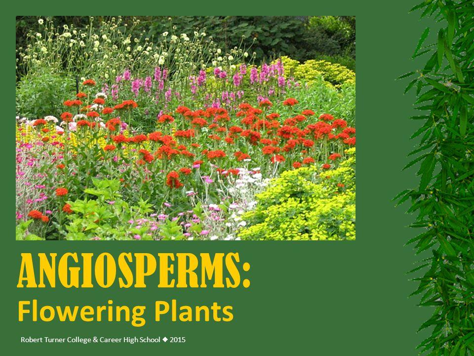 Angiosperms: Flowering Plants