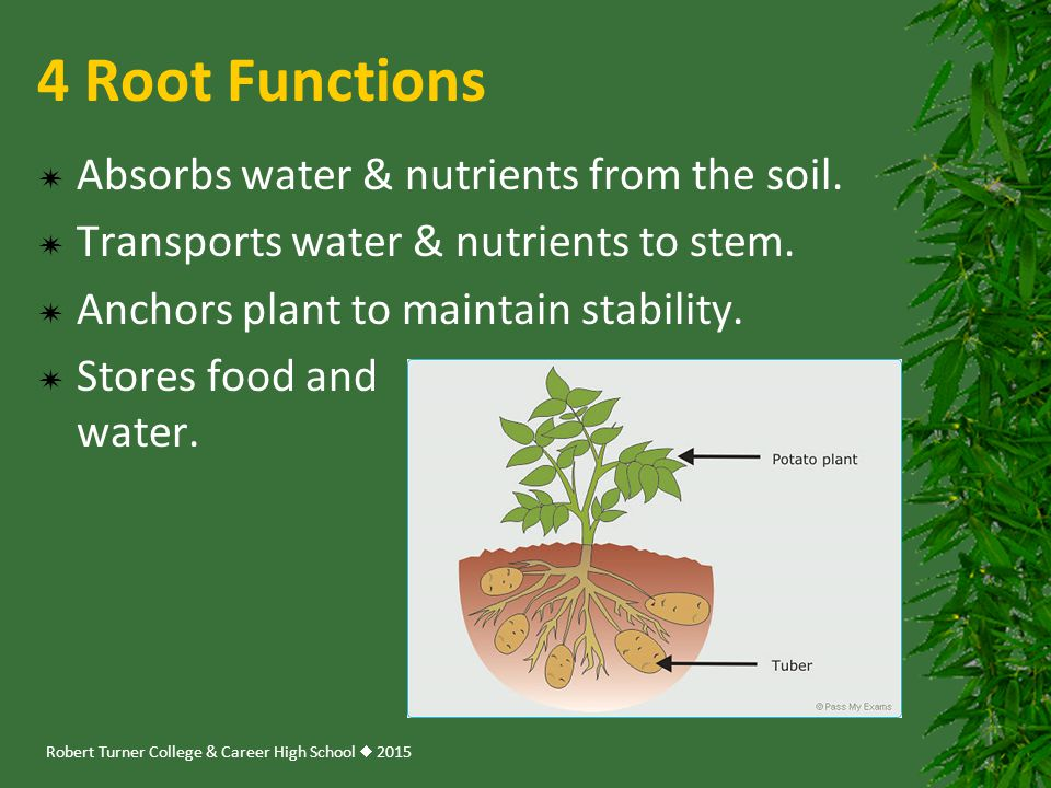 Introducing plants ppt download for 4 parts of soil