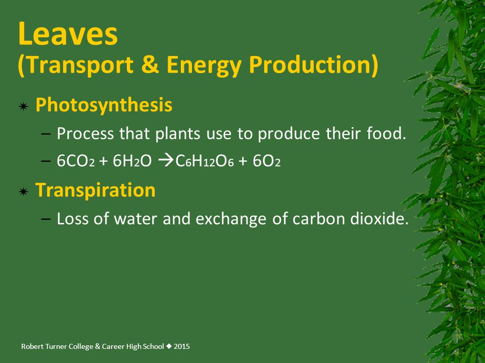 Leaves (Transport & Energy Production)