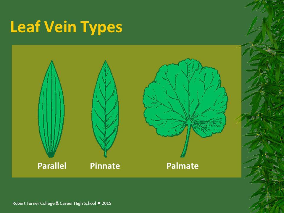 Leaf Vein Types Parallel Pinnate Palmate