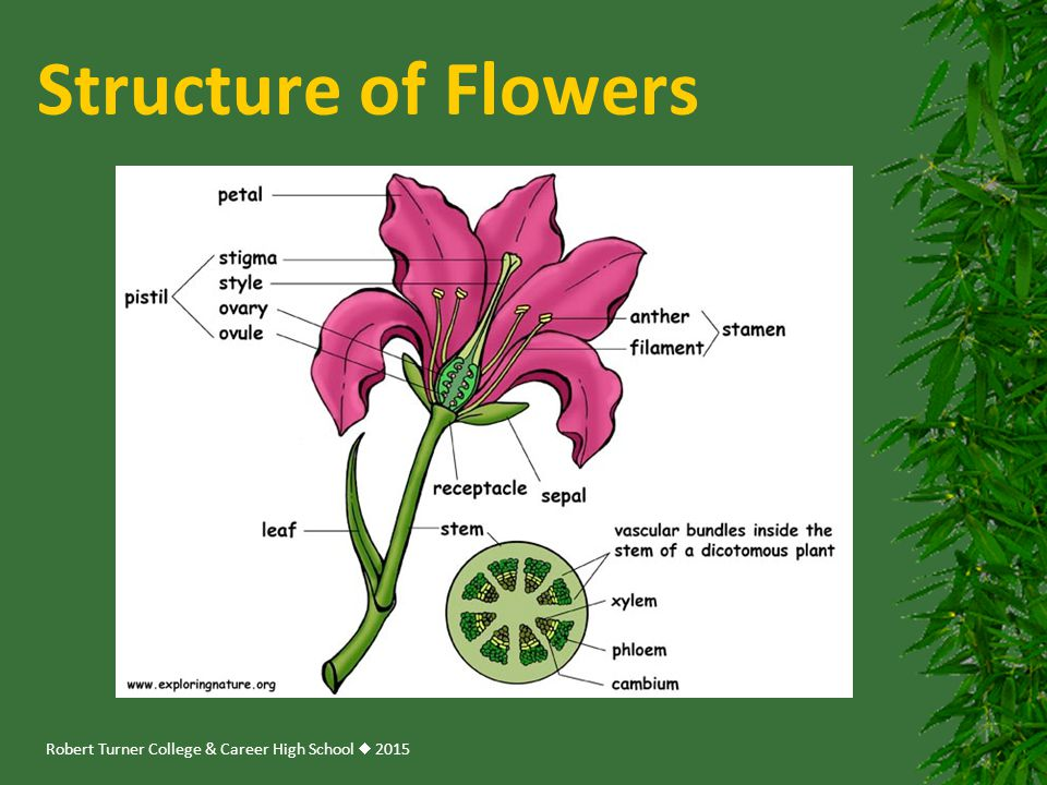 Structure of Flowers
