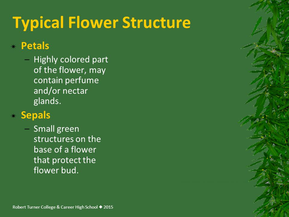 Typical Flower Structure