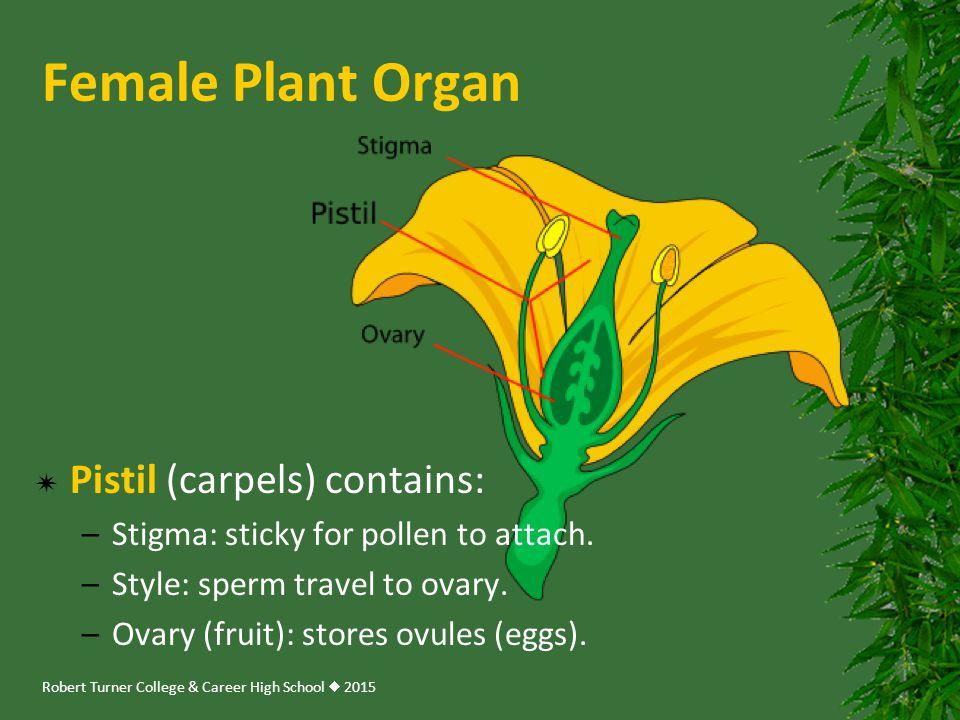 Female Plant Organ Pistil (carpels) contains: