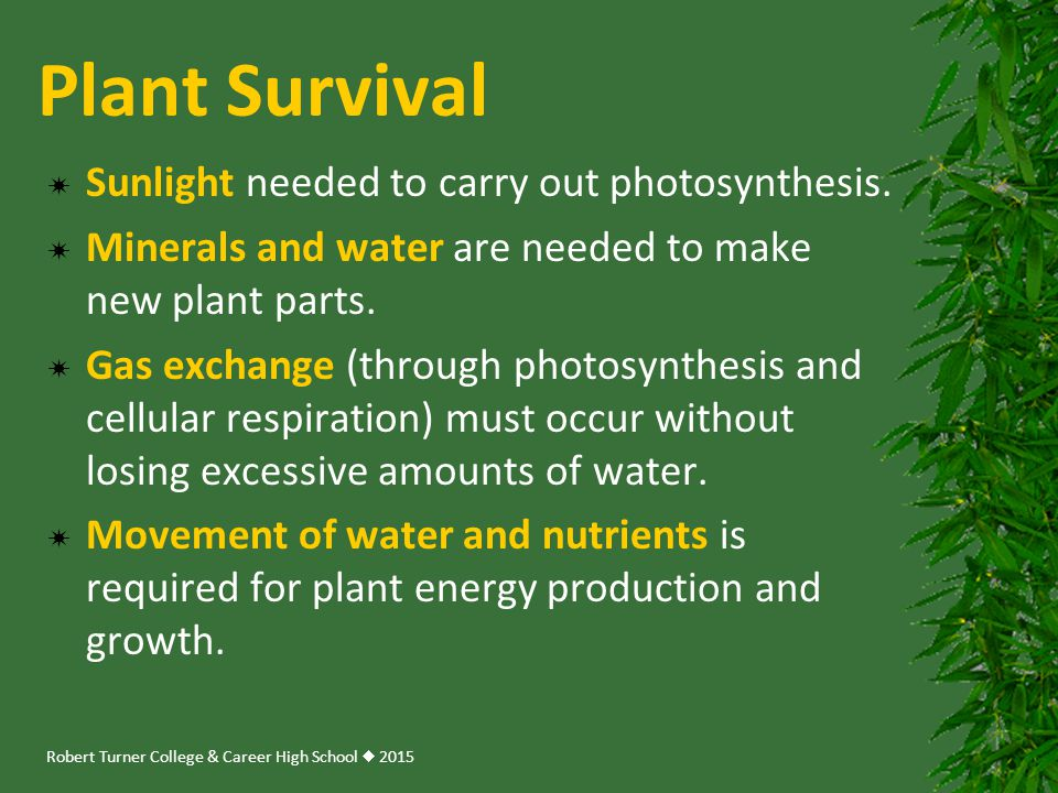 Plant Survival Sunlight needed to carry out photosynthesis.