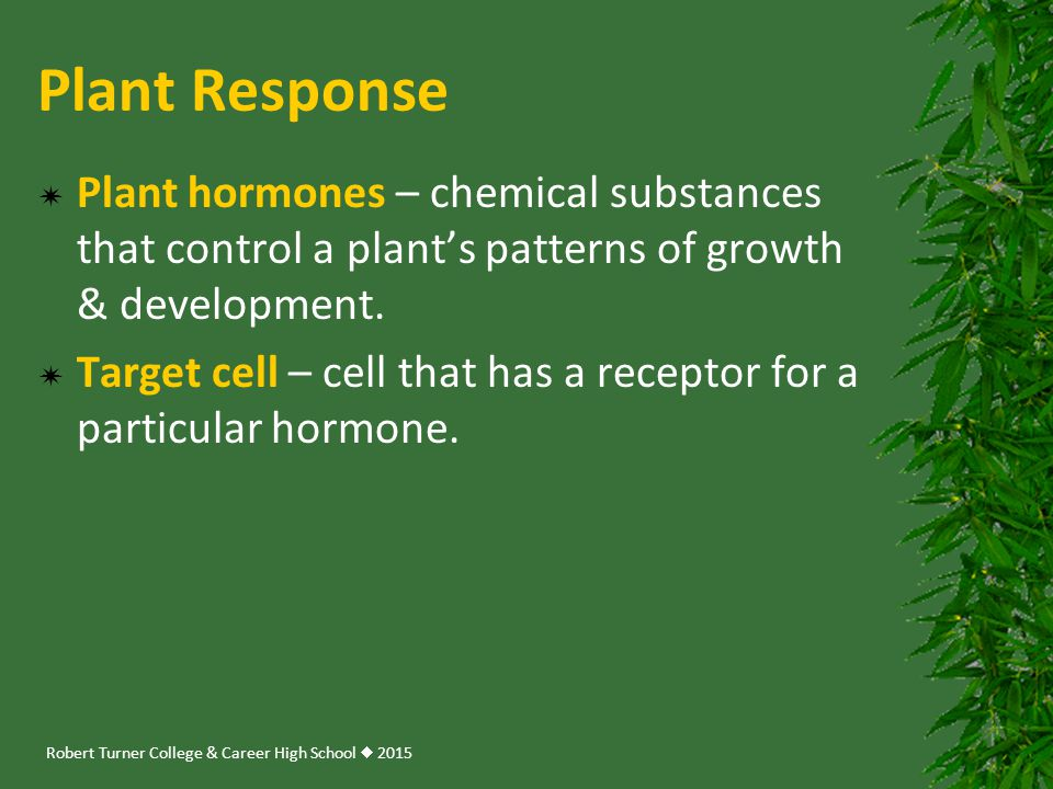 Plant Response Plant hormones – chemical substances that control a plant's patterns of growth & development.