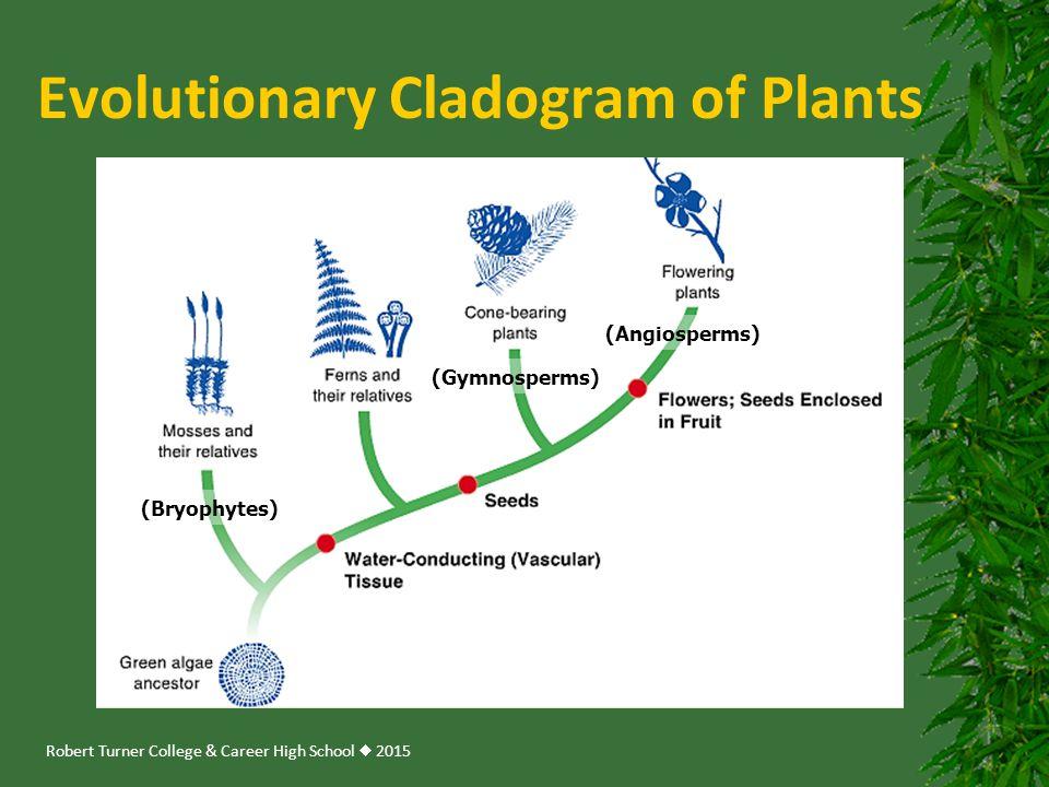 Evolutionary Cladogram of Plants