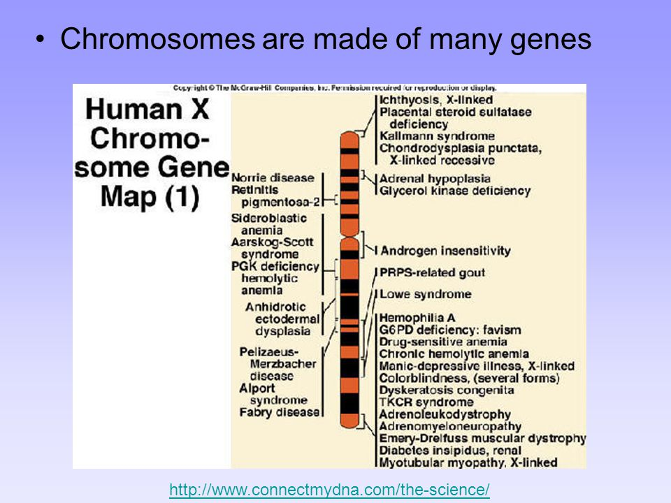 Chromosomes are made of many genes