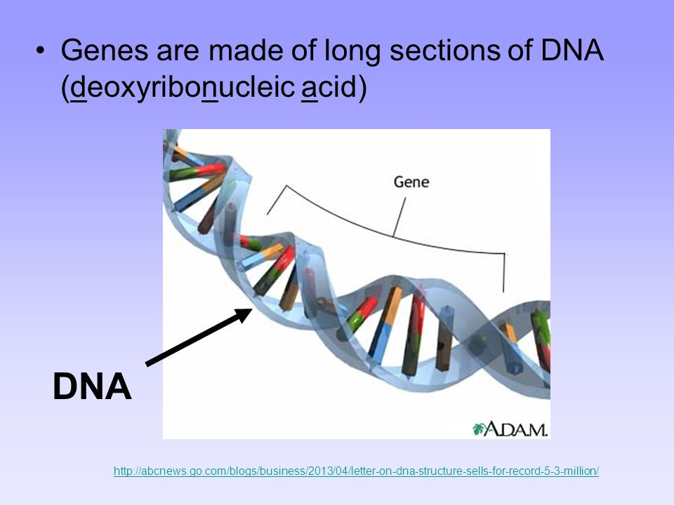 DNA Genes are made of long sections of DNA (deoxyribonucleic acid)
