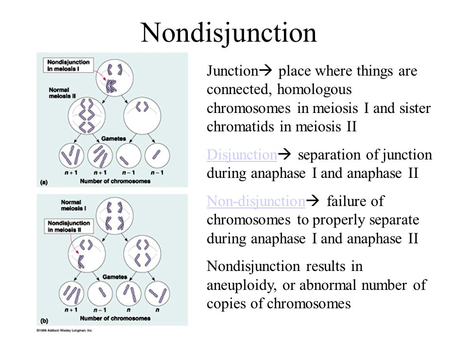Nondisjunction Junction place where things are connected, homologous chromosomes in meiosis I and sister chromatids in meiosis II.