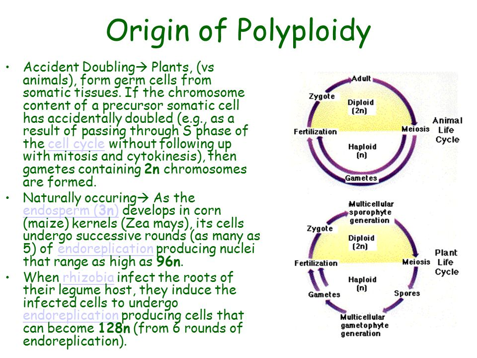 Origin of Polyploidy