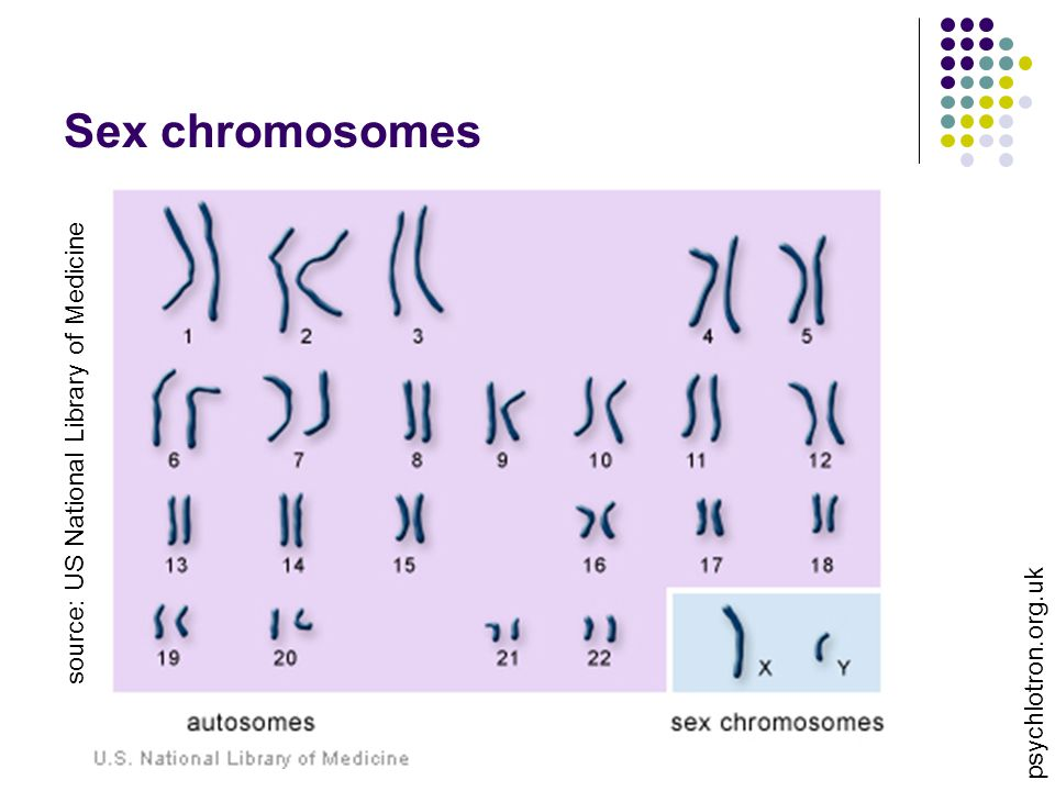 Sex chromosomes source: US National Library of Medicine