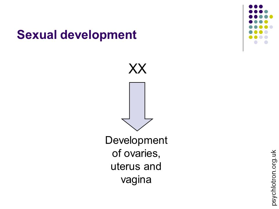 Development of ovaries, uterus and vagina
