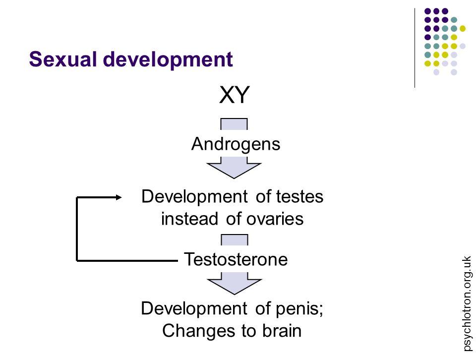 XY Sexual development Androgens