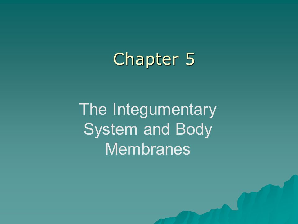 The Integumentary System and Body Membranes