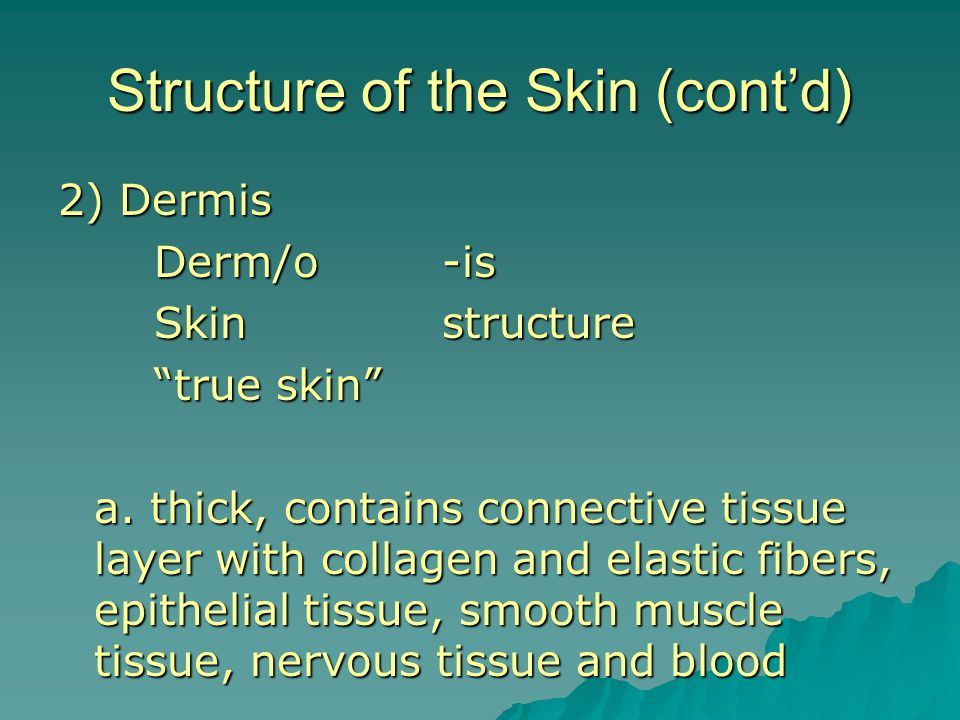 Structure of the Skin (cont'd)