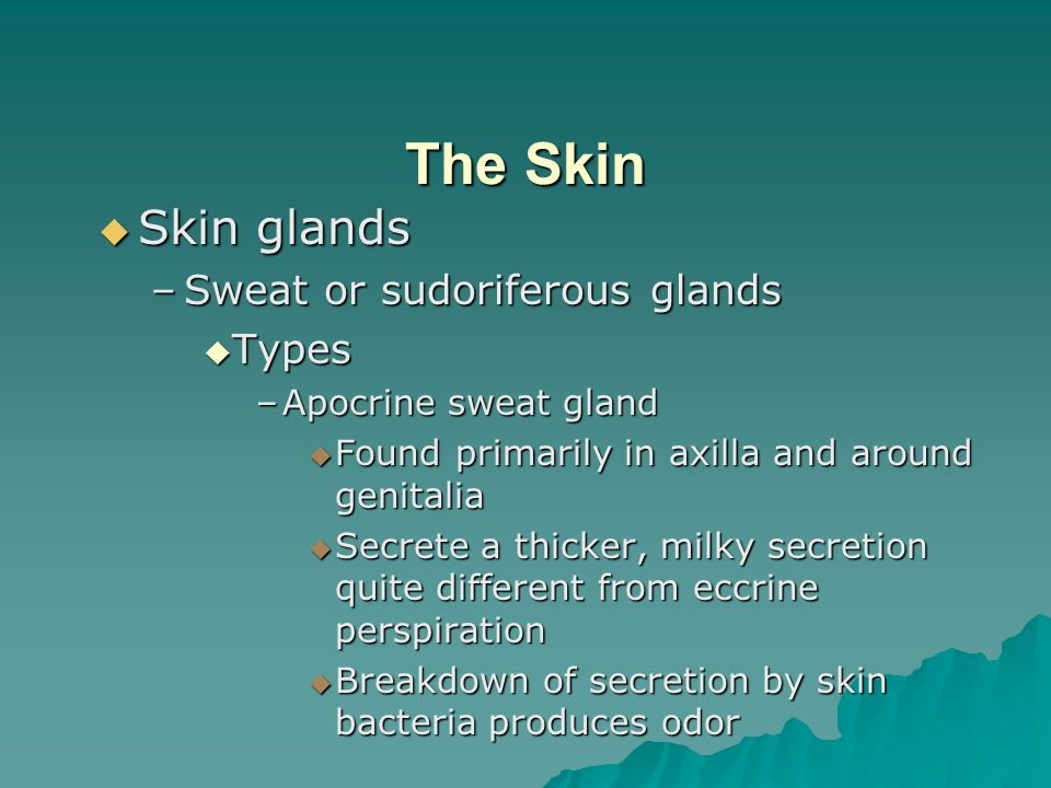 The Skin Skin glands Sweat or sudoriferous glands Types