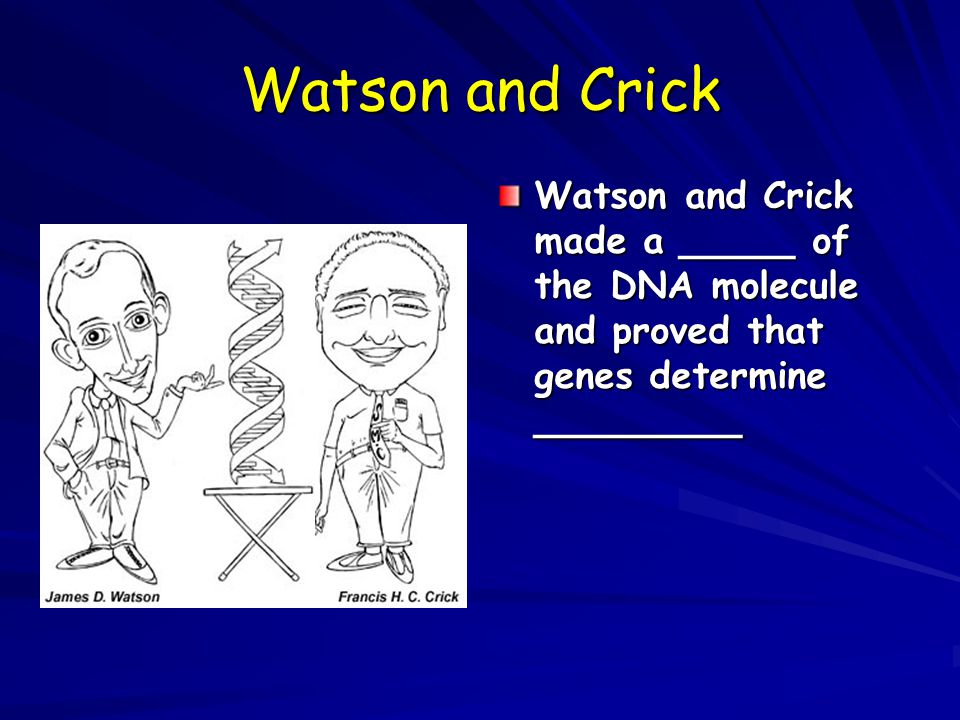 Watson and Crick Watson and Crick made a _____ of the DNA molecule and proved that genes determine _________.