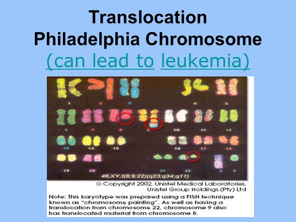 Translocation Philadelphia Chromosome (can lead to leukemia)