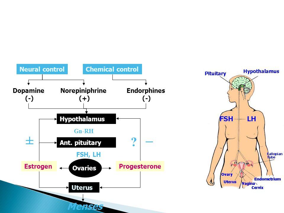 ± – Menses Neural control Chemical control Dopamine (-)