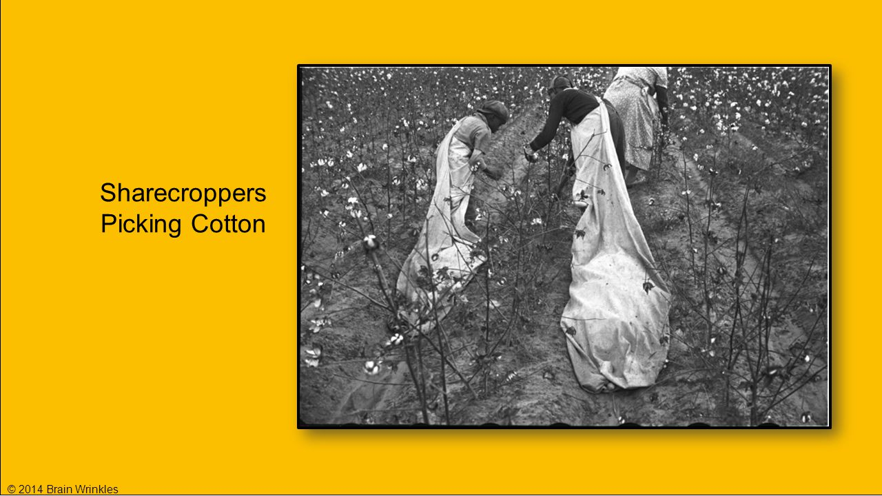 Sharecroppers Picking Cotton