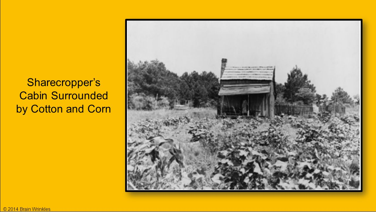Sharecropper's Cabin Surrounded by Cotton and Corn