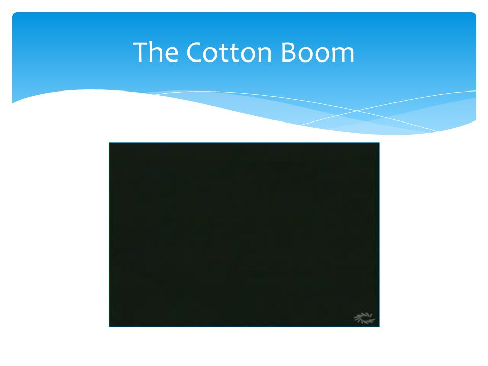 The Cotton Boom