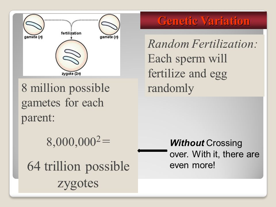 64 trillion possible zygotes
