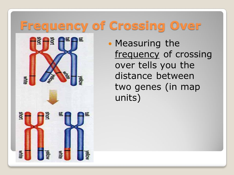 Frequency of Crossing Over