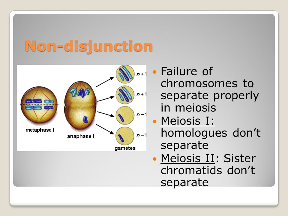 Non-disjunction Failure of chromosomes to separate properly in meiosis