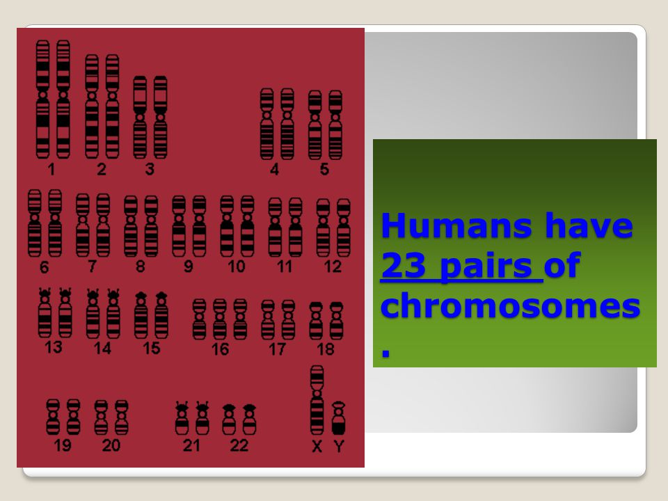 Humans have 23 pairs of chromosomes.
