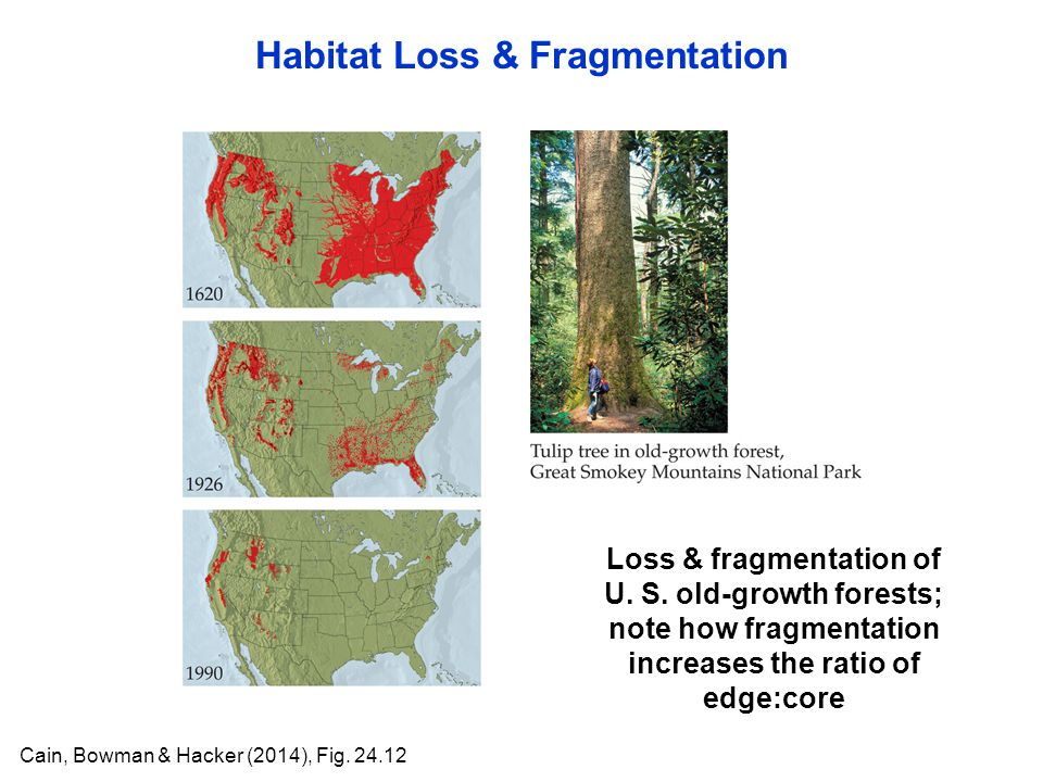Habitat Loss & Fragmentation