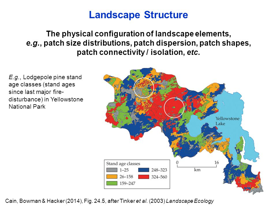 Landscape Structure The physical configuration of landscape elements,