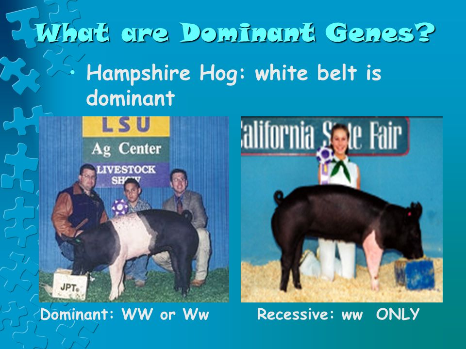 What are Dominant Genes