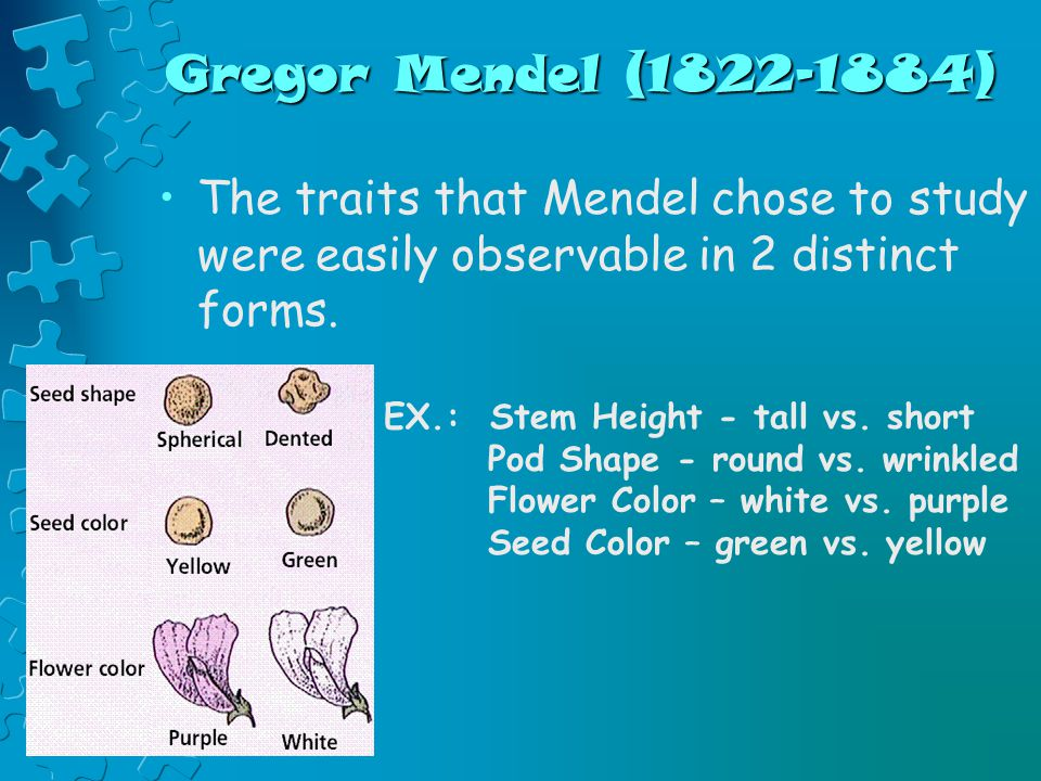 Gregor Mendel (1822-1884) The traits that Mendel chose to study were easily observable in 2 distinct forms.