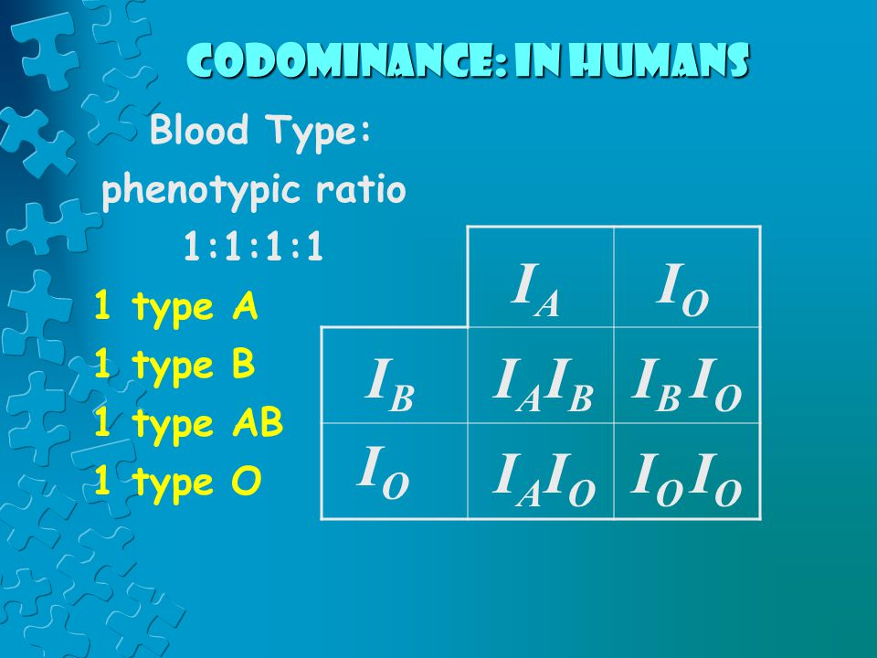 Codominance: in humans Blood Type: phenotypic ratio 1:1:1:1