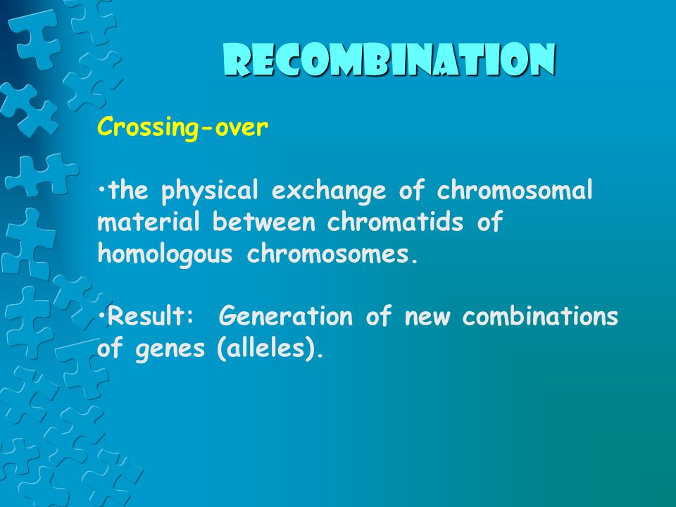 recombination Crossing-over