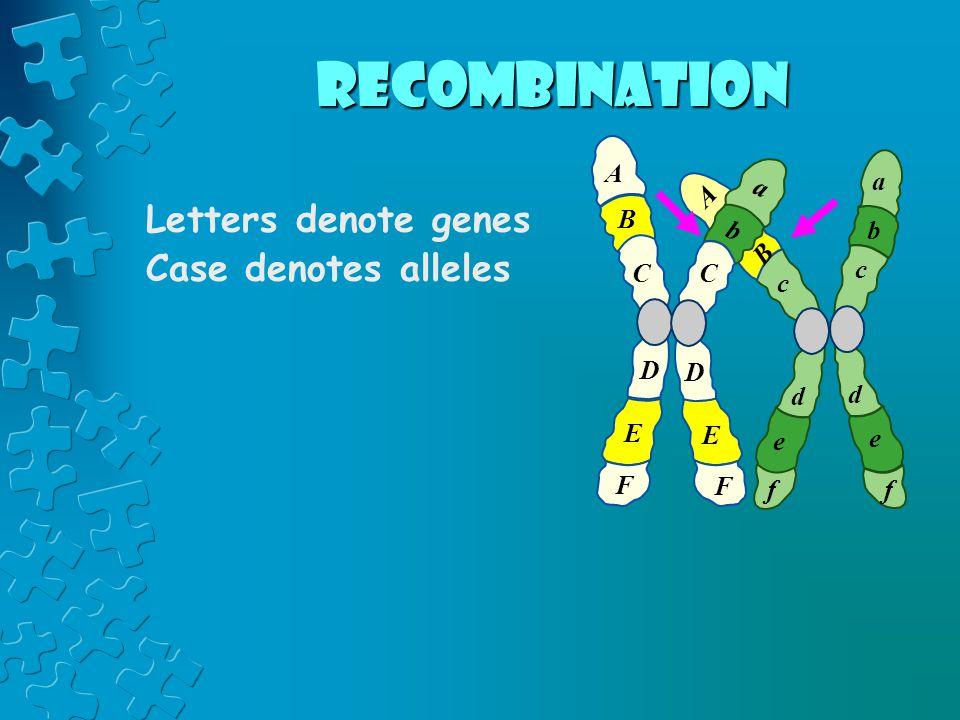 recombination Letters denote genes Case denotes alleles A a a A B b b