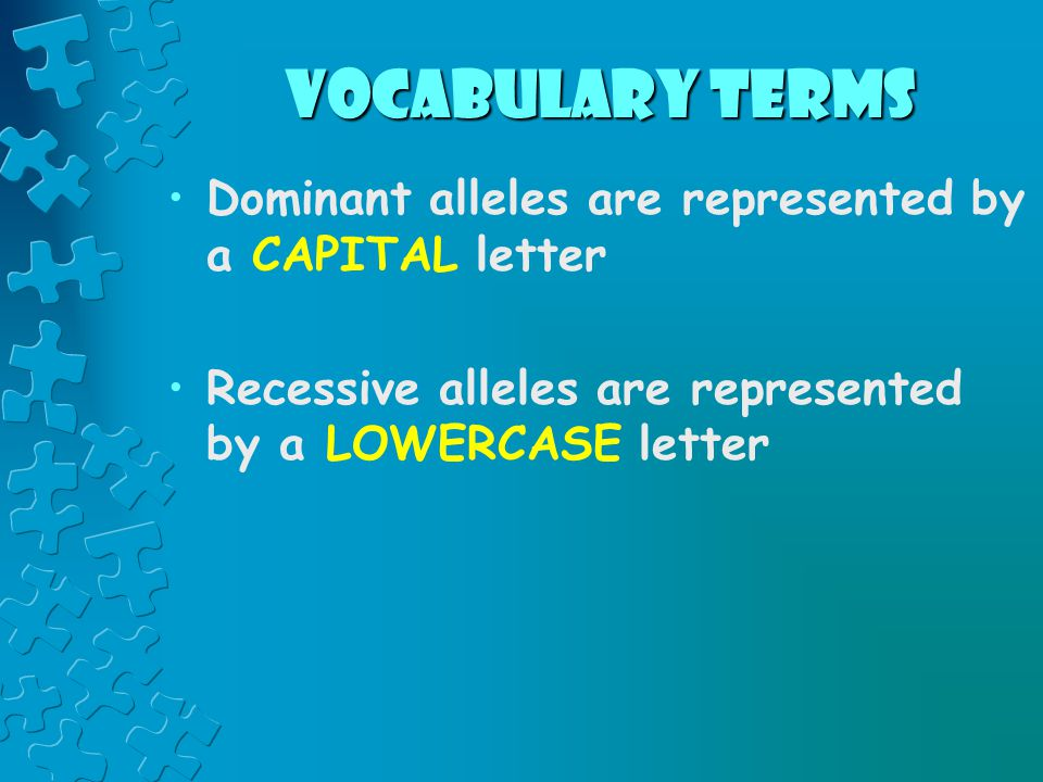 vocabulary terms Dominant alleles are represented by a CAPITAL letter