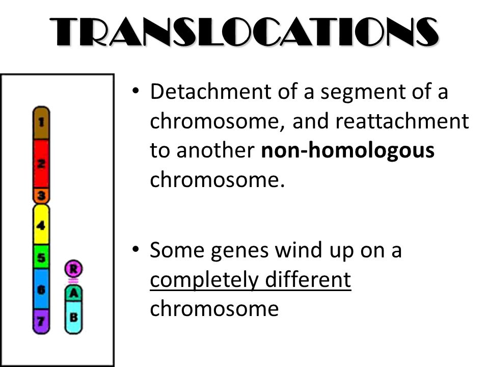 TRANSLOCATIONS Detachment of a segment of a chromosome, and reattachment to another non-homologous chromosome.