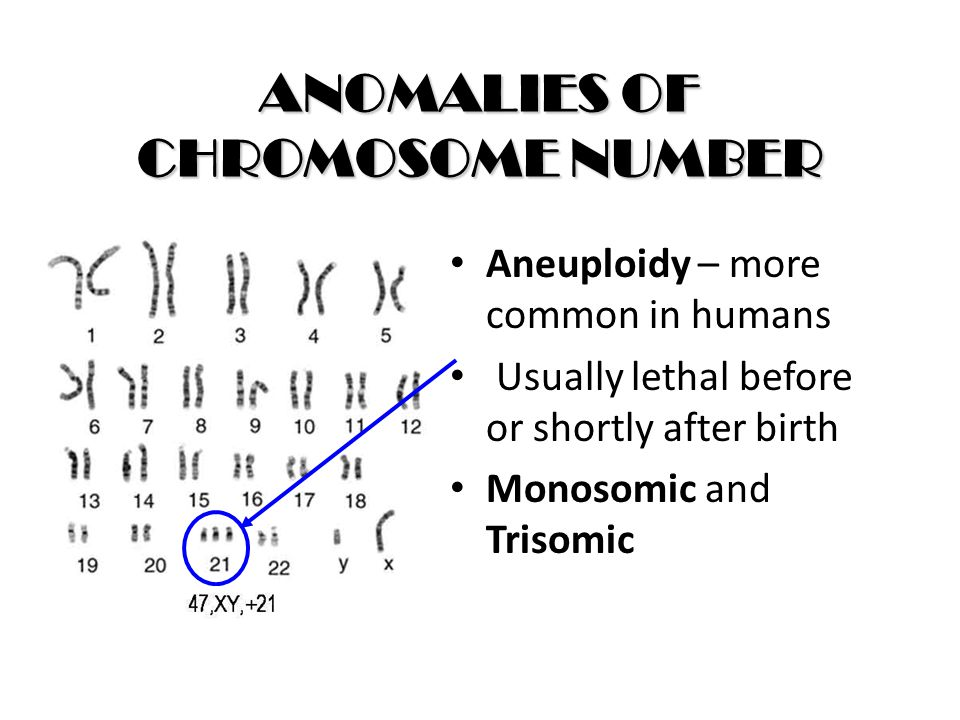 ANOMALIES OF CHROMOSOME NUMBER