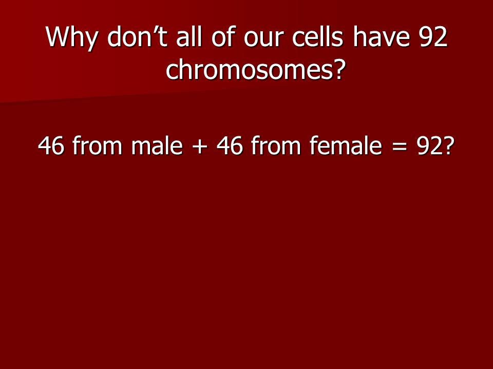 Why don't all of our cells have 92 chromosomes
