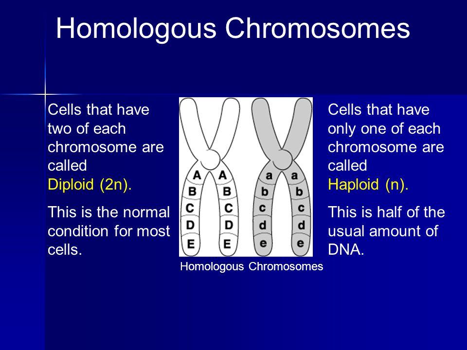 Homologous Chromosomes