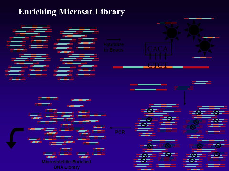 Enriching Microsat Library