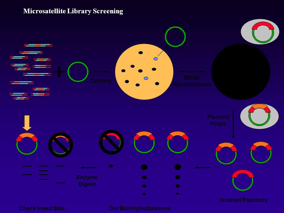 Microsatellite Library Screening