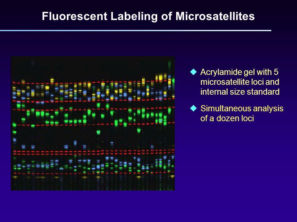 Fluorescent Labeling of Microsatellites