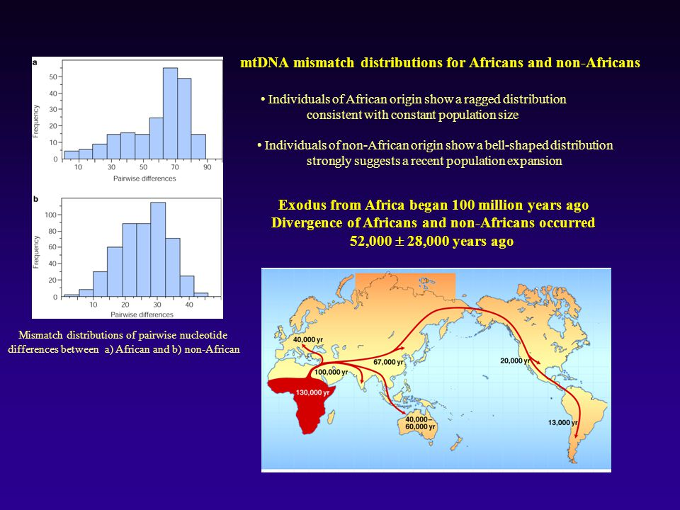 mtDNA mismatch distributions for Africans and non-Africans
