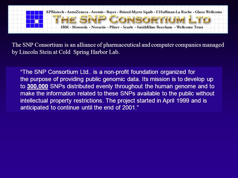 The SNP Consortium is an alliance of pharmaceutical and computer companies managed by Lincoln Stein at Cold Spring Harbor Lab.