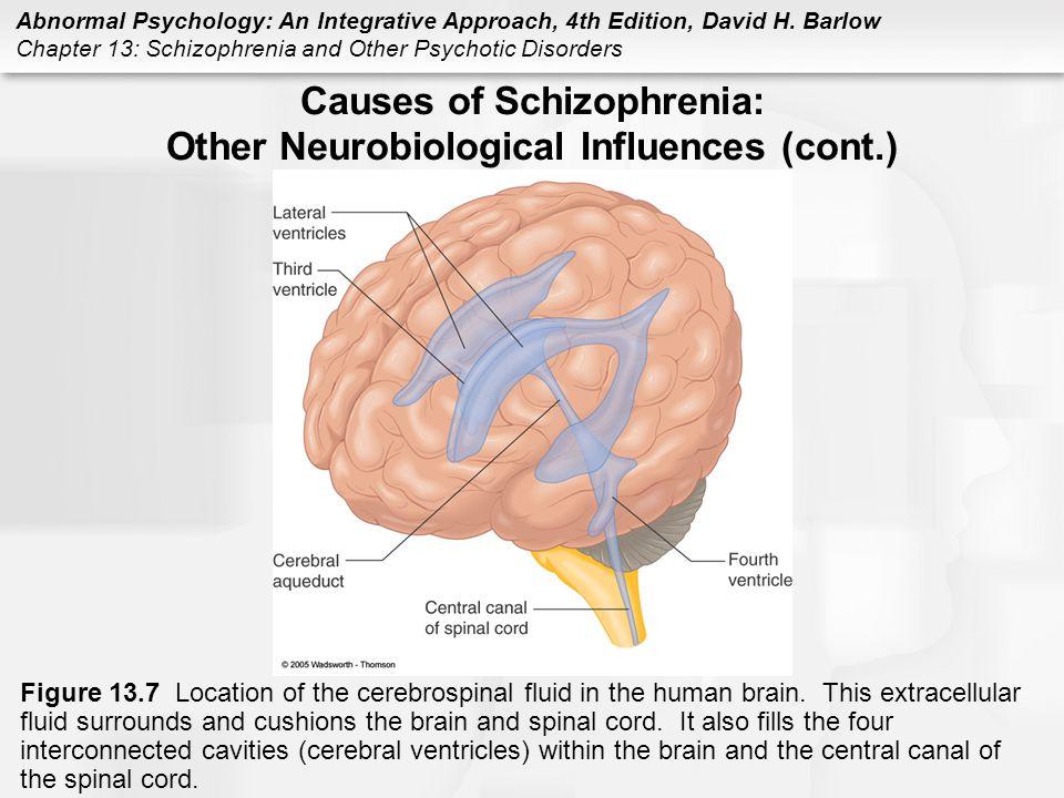 Causes of Schizophrenia: Other Neurobiological Influences (cont.)