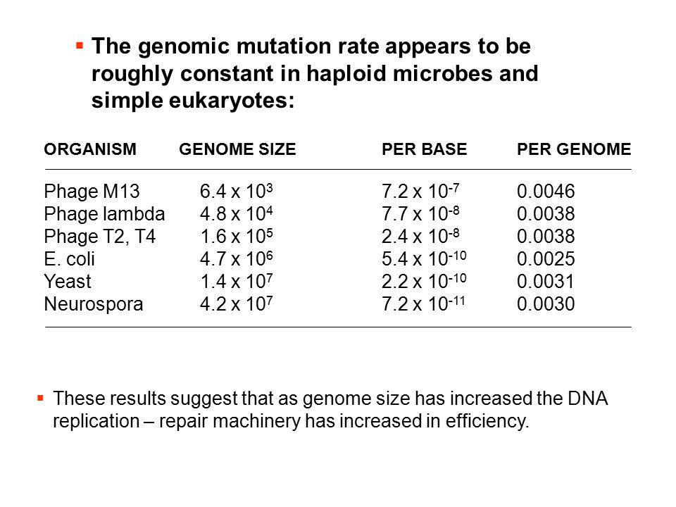 The genomic mutation rate appears to be roughly constant in haploid microbes and simple eukaryotes: