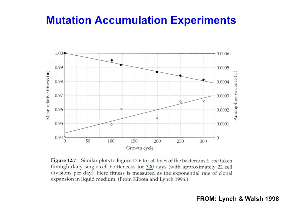 Mutation Accumulation Experiments